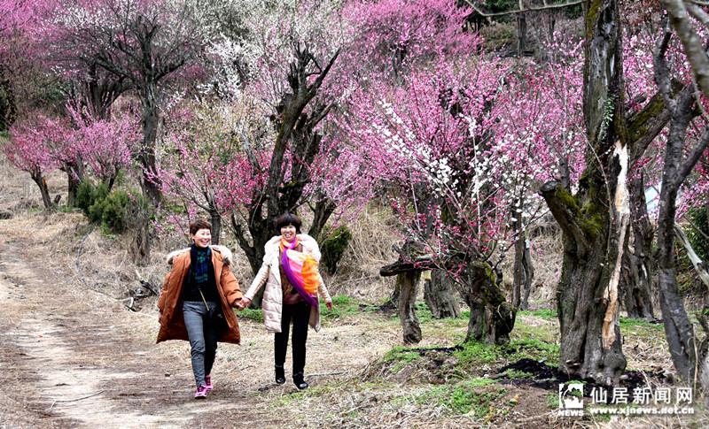 2月25日,南峰街道酒壶坑风景区的梅花进入最佳观赏期,美丽烂漫的